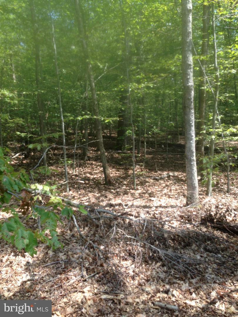 Additional photo for property listing at 5325 Bennett Brae Pl  La Plata, Maryland 20646 United States