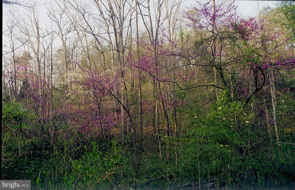 Additional photo for property listing at Oak Hill Ct  Stephens City, Virginia 22655 United States