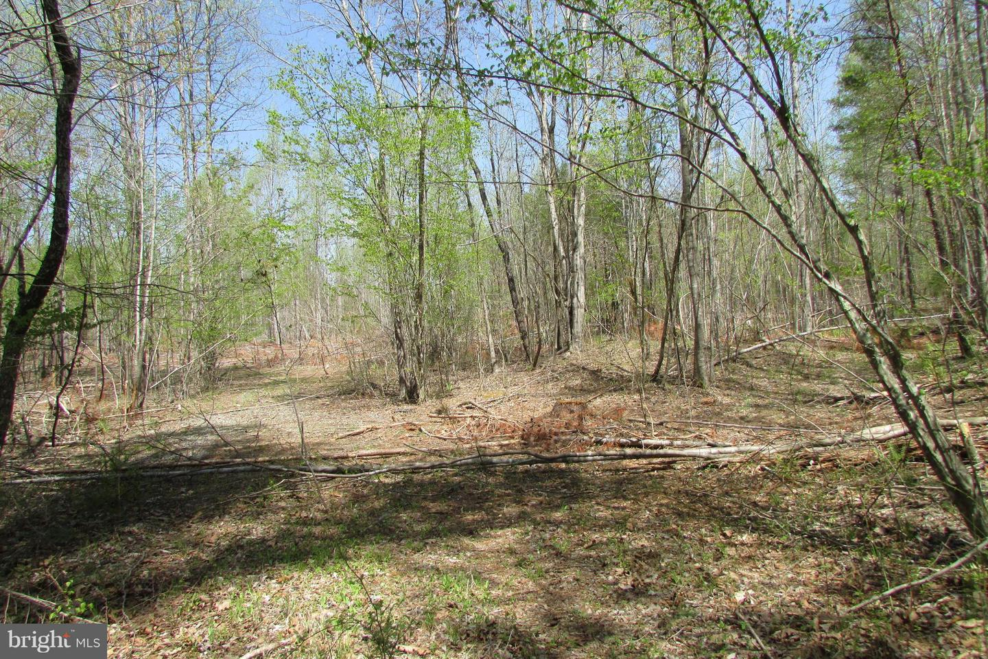 Additional photo for property listing at Governors Point Ln  Unionville, Virginia 22567 United States
