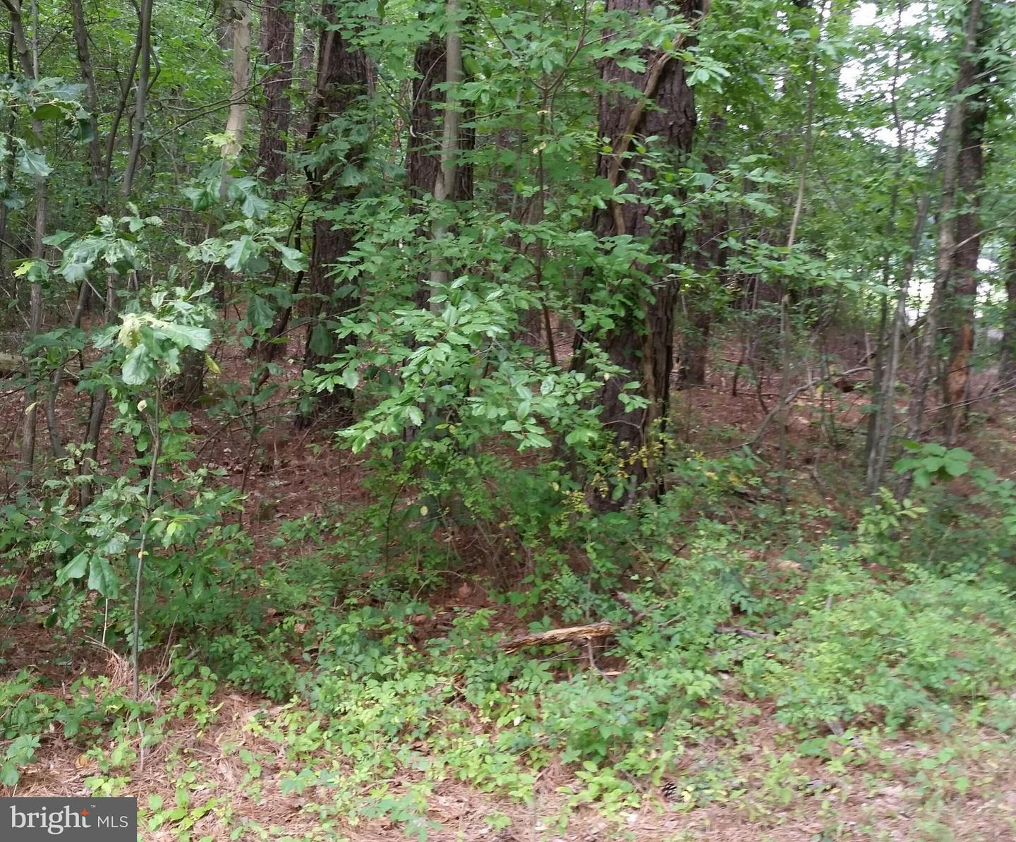 Land for Sale at Buck Rub Lot #2 Rd Trappe, Maryland 21673 United States