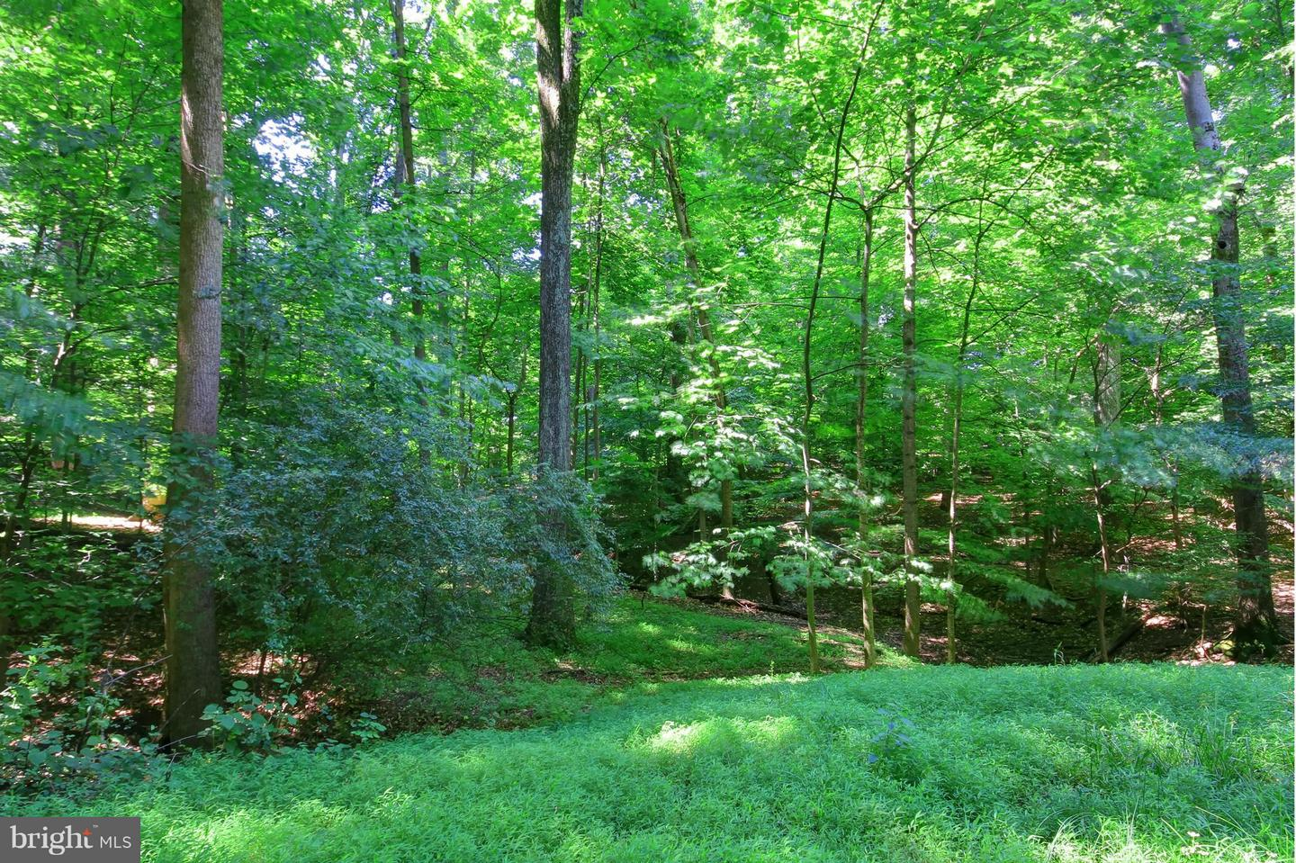 Additional photo for property listing at 119 Commonage Dr  Great Falls, Virginia 22066 United States