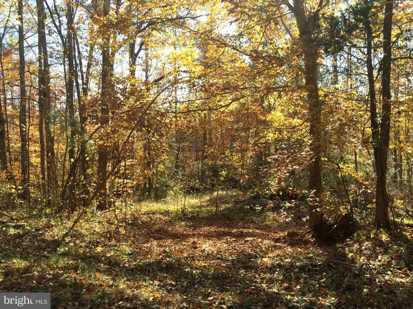 Additional photo for property listing at Norway Rd  Ruther Glen, Virginia 22546 United States