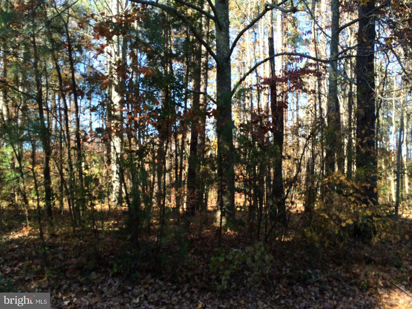 Additional photo for property listing at Shannon Mill  Ruther Glen, Virginia 22546 United States