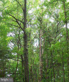 Land for Sale at 0 Cedar Ln Bowling Green, Virginia 22427 United States