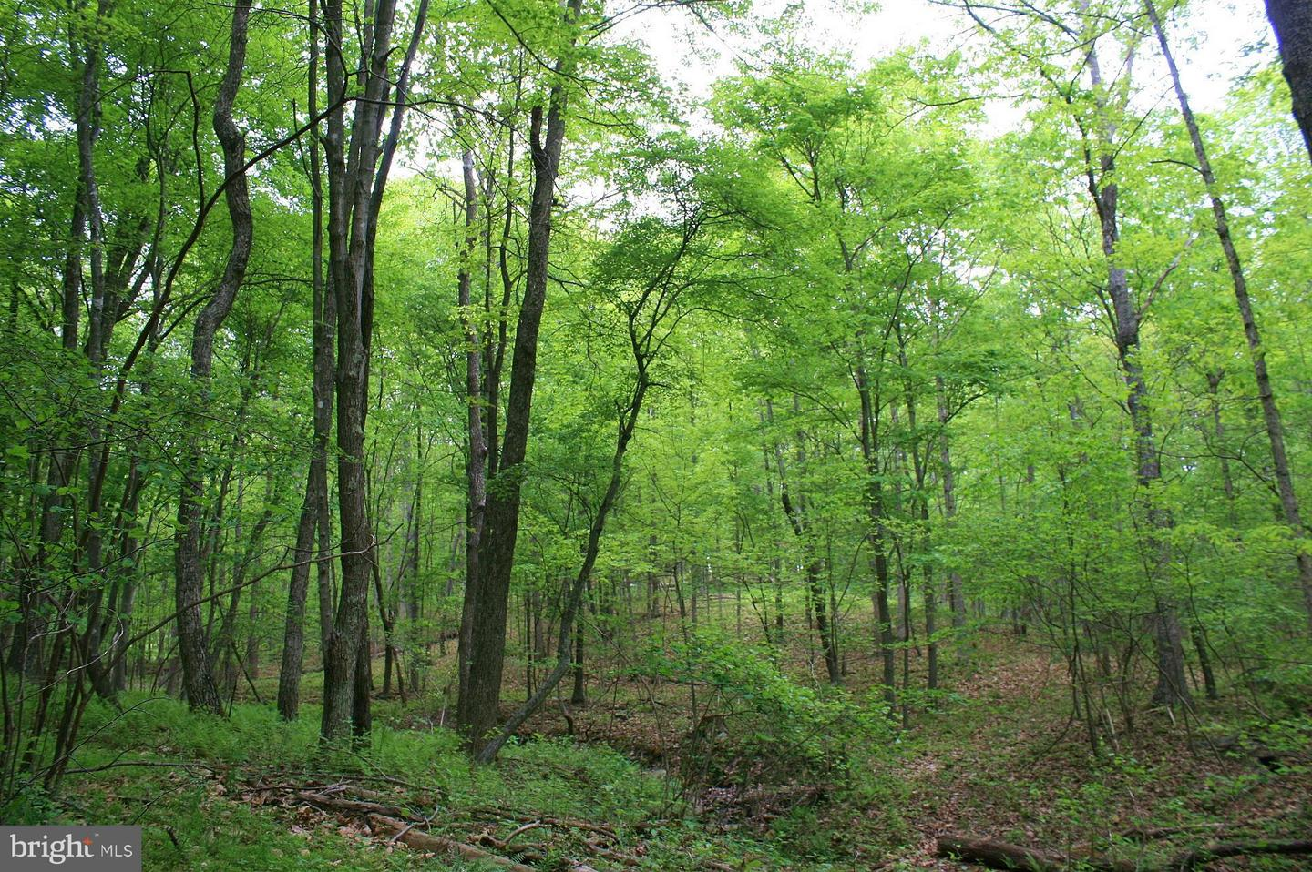 Land for Sale at Deer Track Lane Slanesville, West Virginia 25444 United States