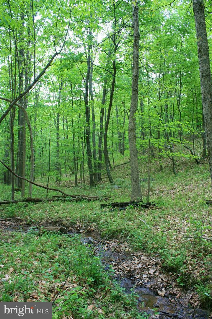 Additional photo for property listing at Deer Track Lane  Slanesville, West Virginia 25444 United States