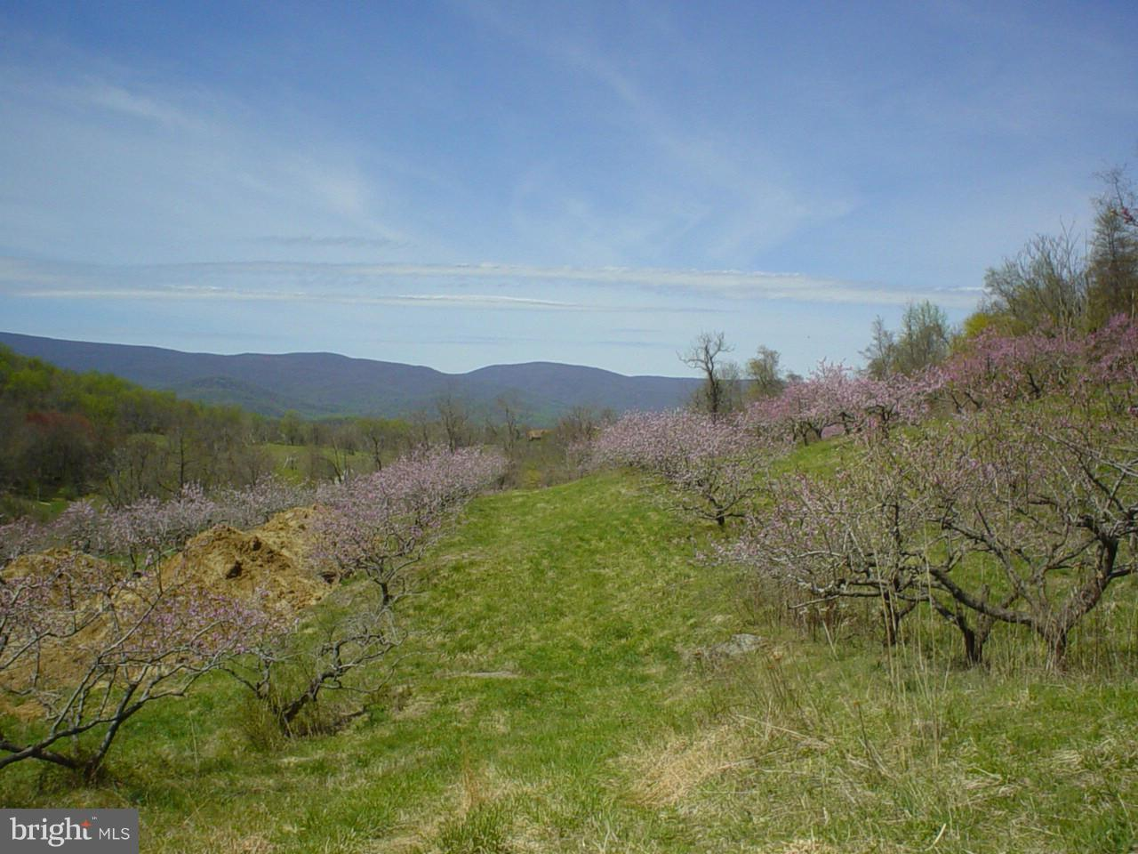Additional photo for property listing at Ben Venue Rd  Flint Hill, Virginia 22627 United States