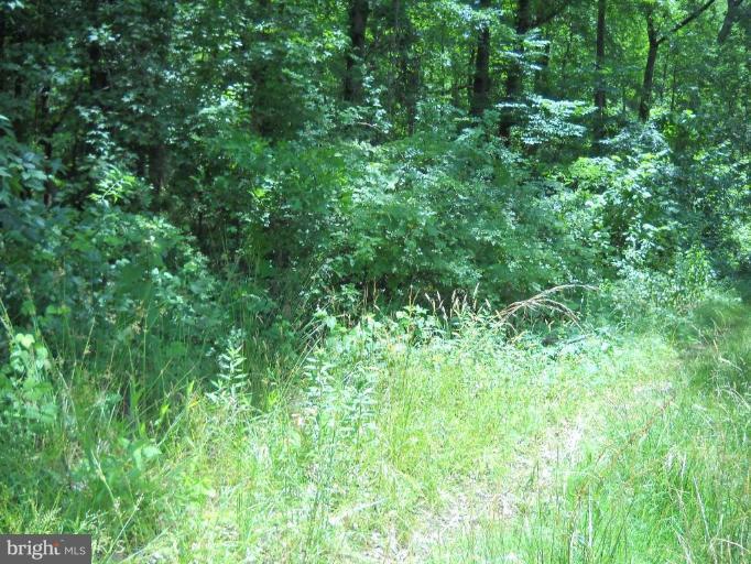Land for Sale at Lot 17 Oakley Dr Bushwood, Maryland 20618 United States