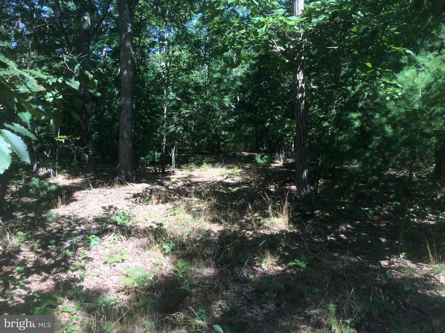 Additional photo for property listing at Four Wheel Drive  Star Tannery, Virginia 22654 United States