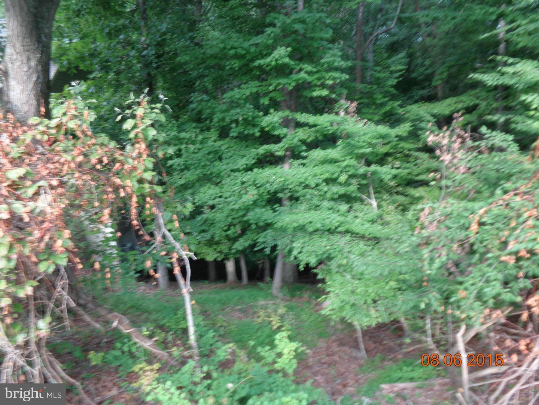 Additional photo for property listing at 6714 Woodridge Rd  New Market, Maryland 21774 United States