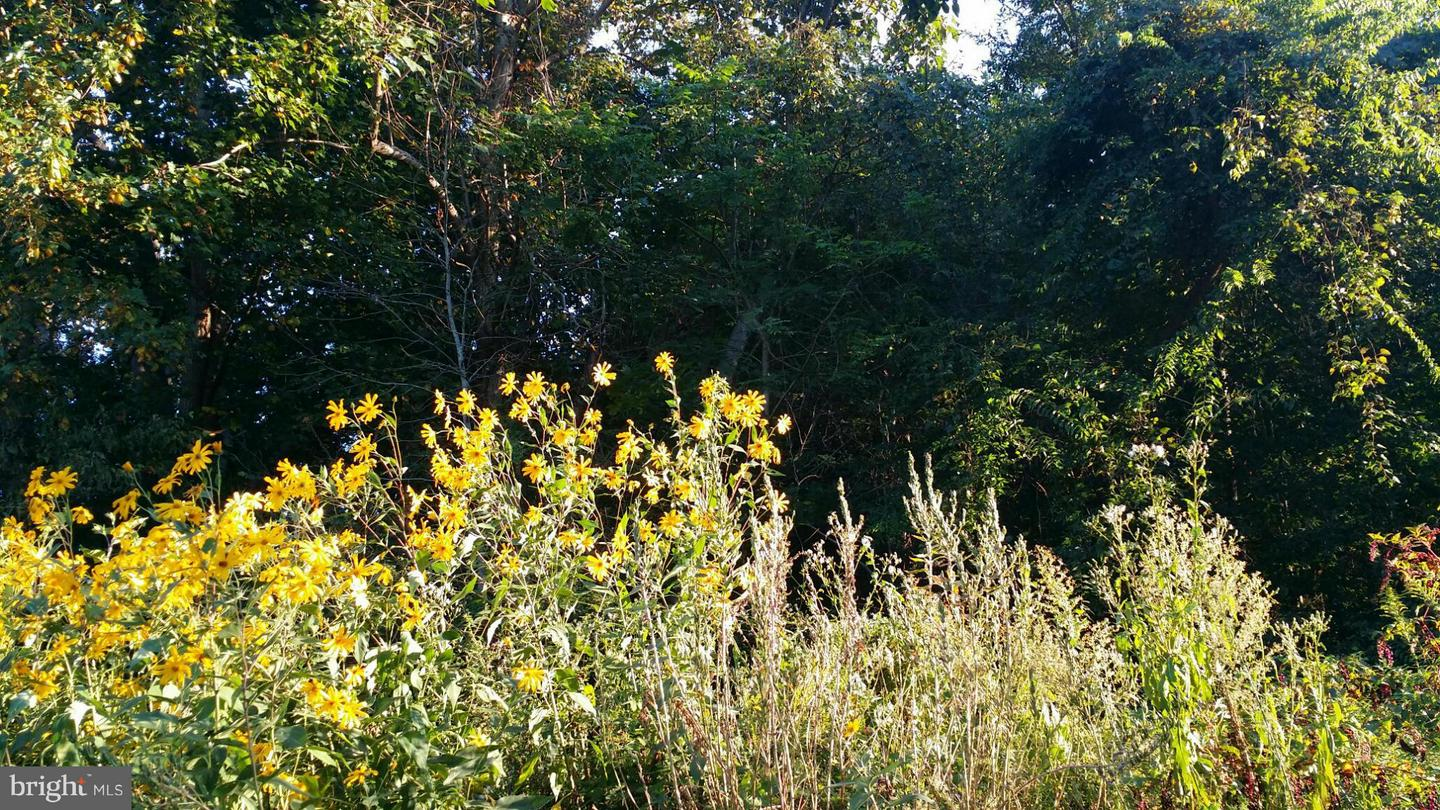 Additional photo for property listing at 0 Cannery Road  Bowling Green, Virginia 22427 United States