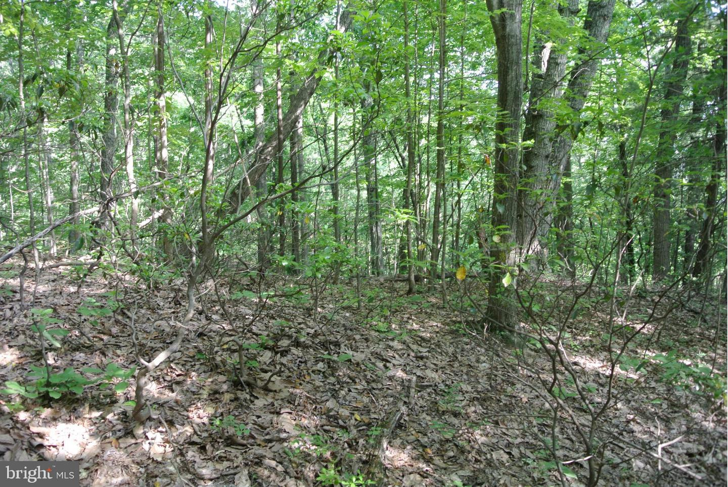 Additional photo for property listing at 0 Castleton View Road  Castleton, Virginia 22716 United States