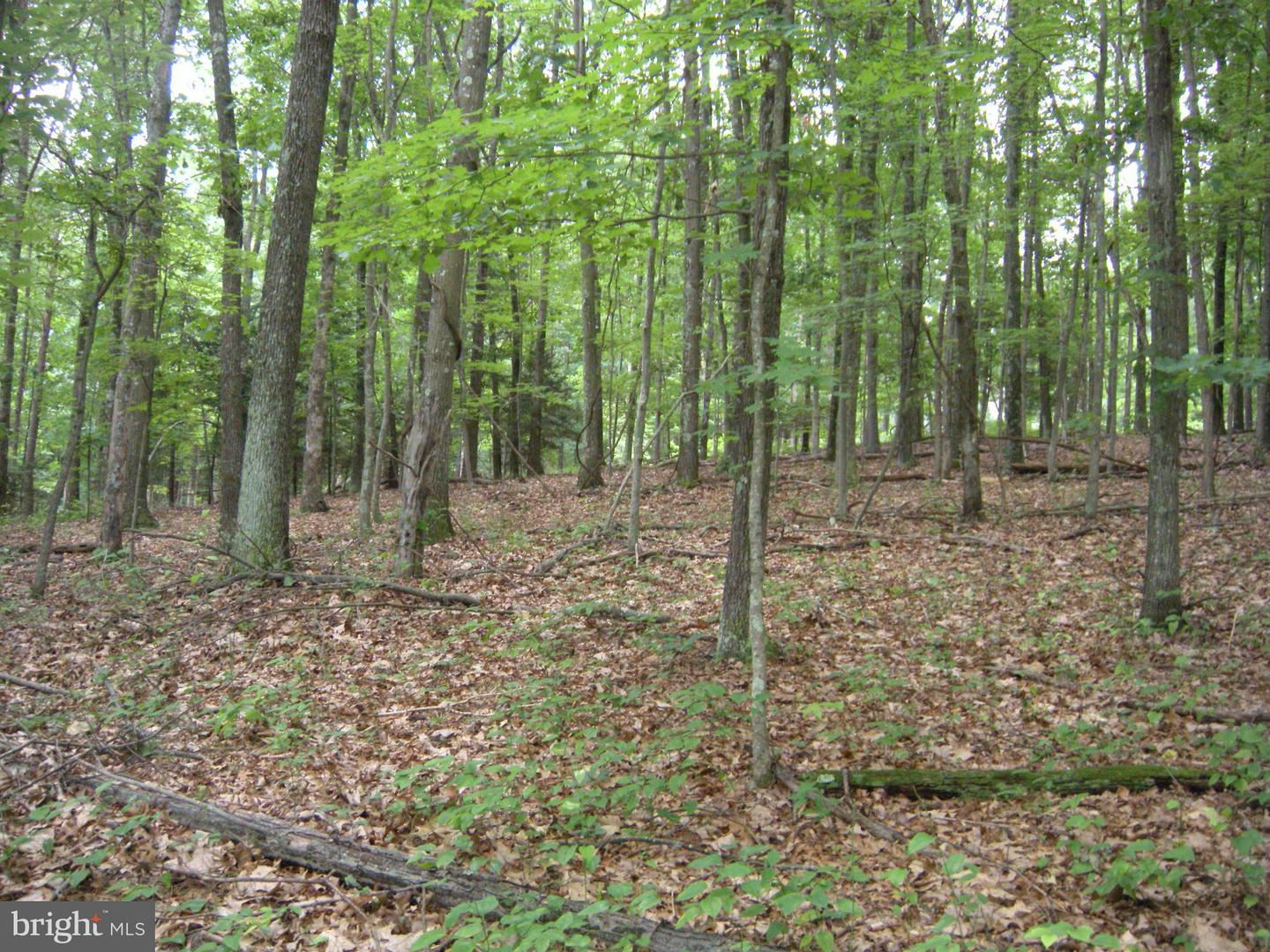 Land for Sale at Lot 6d Hollybush Ln Berkeley Springs, West Virginia 25411 United States