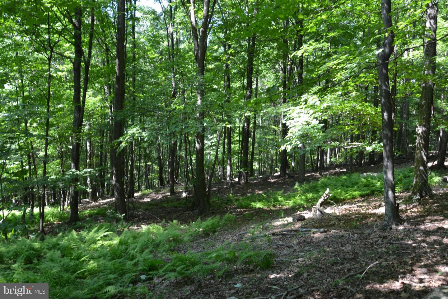 Land for Sale at Lot Z Jacksonville Road Clearville, Pennsylvania 15535 United States