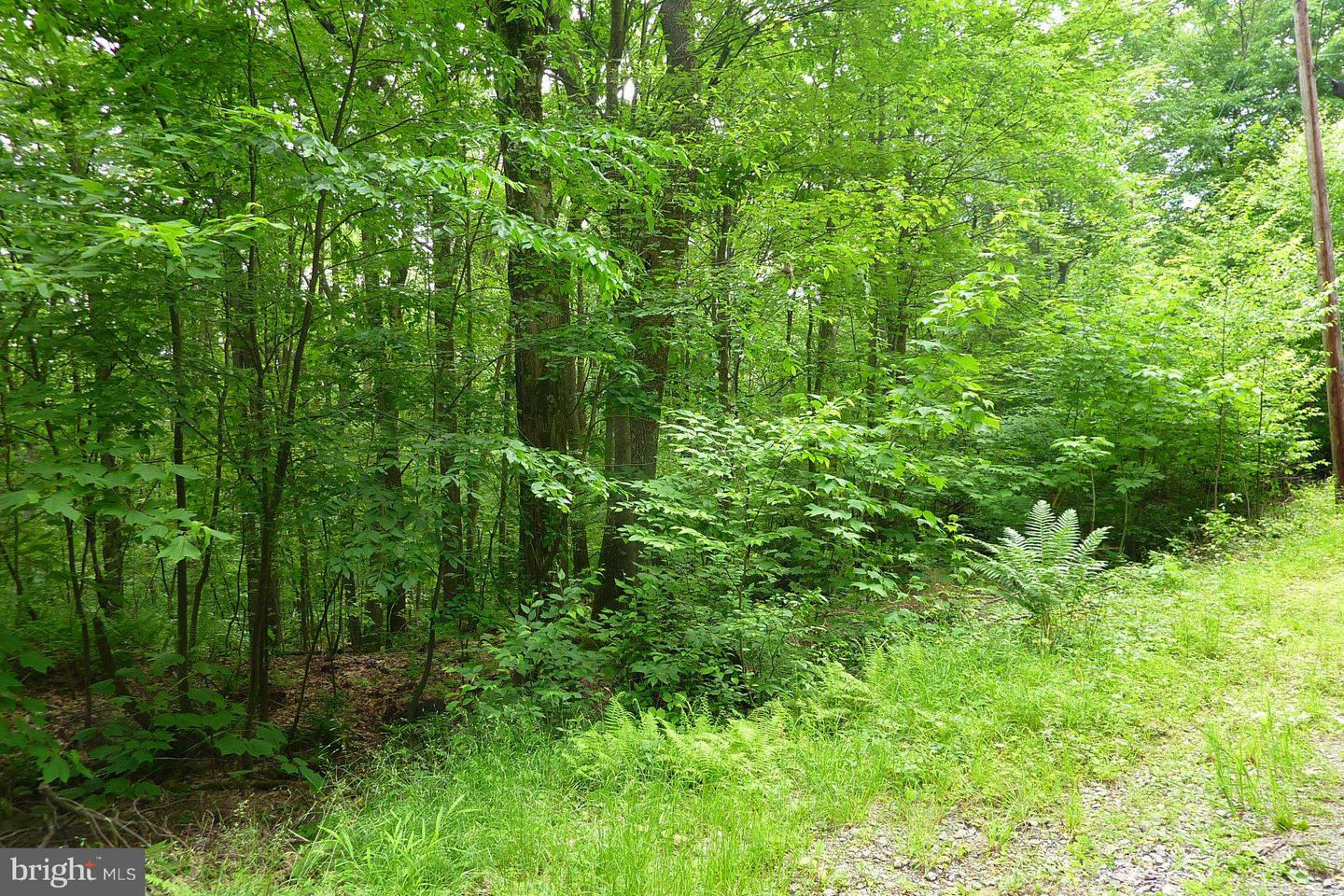 Land for Sale at 15-16 Fawn Dr Oakland, Maryland 21550 United States