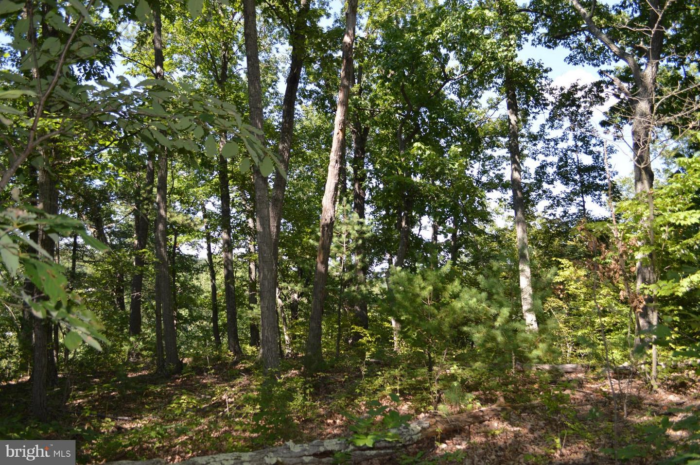 Land for Sale at 0 Cedar Mountain Lane Front Royal, Virginia 22630 United States