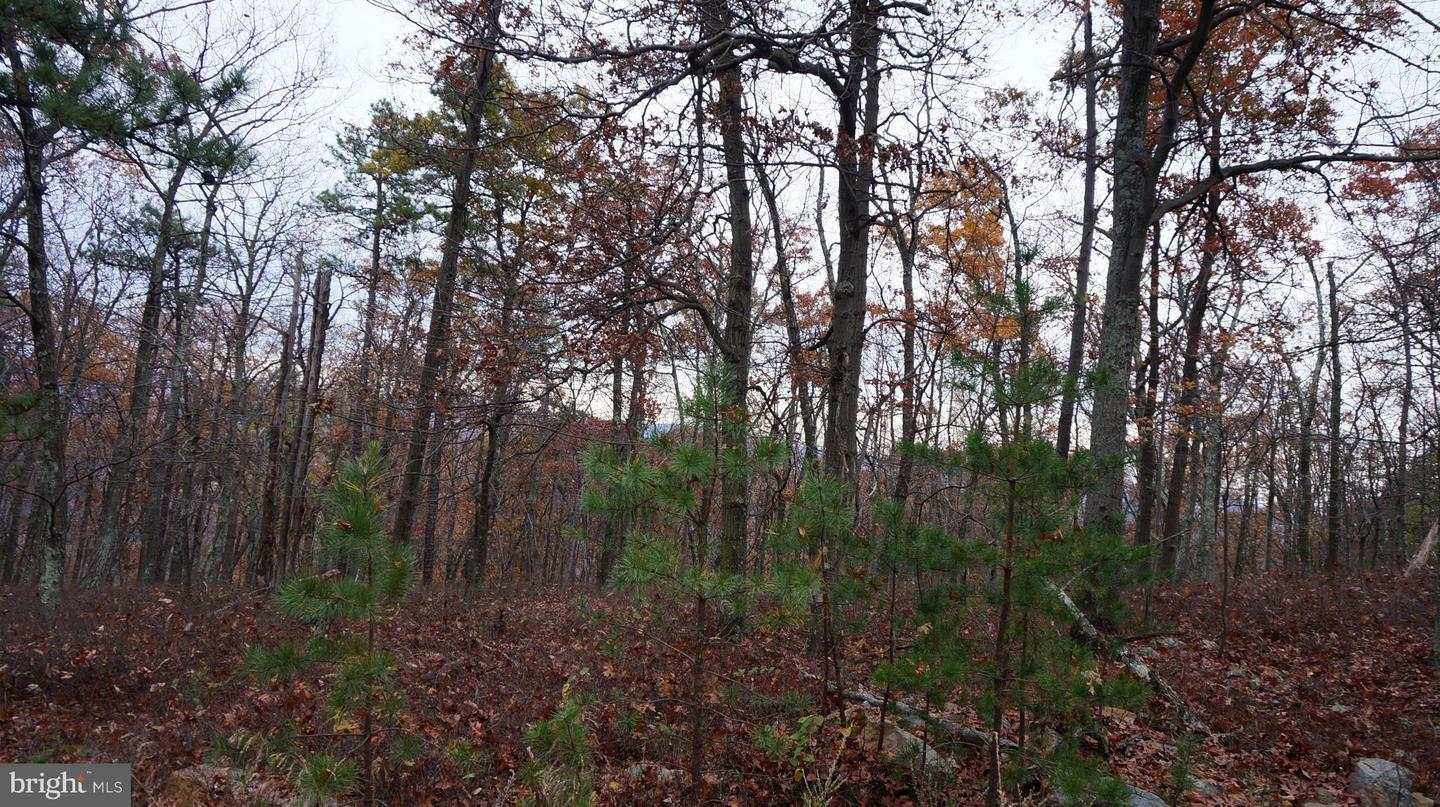 Additional photo for property listing at Breakeven Rd  Berkeley Springs, West Virginia 25411 United States
