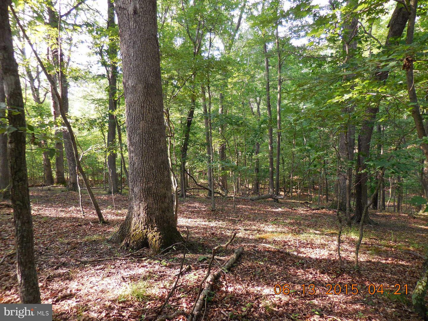 Land for Sale at Sycamore Lane Gore, Virginia 22637 United States