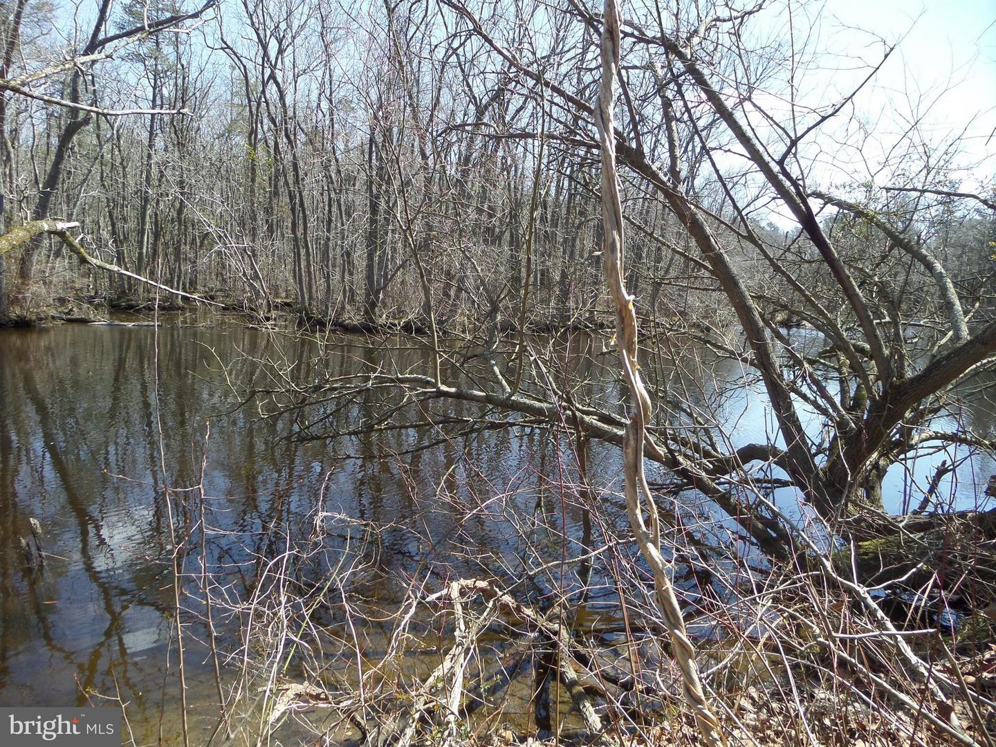 Land for Sale at Galestown Rd Rhodesdale, Maryland 21659 United States