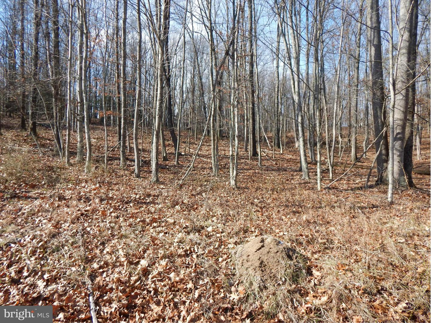 Land for Sale at Hollybush Ln Berkeley Springs, West Virginia 25411 United States