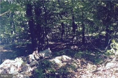 Land for Sale at Mountain Lion Ln Augusta, West Virginia 26704 United States