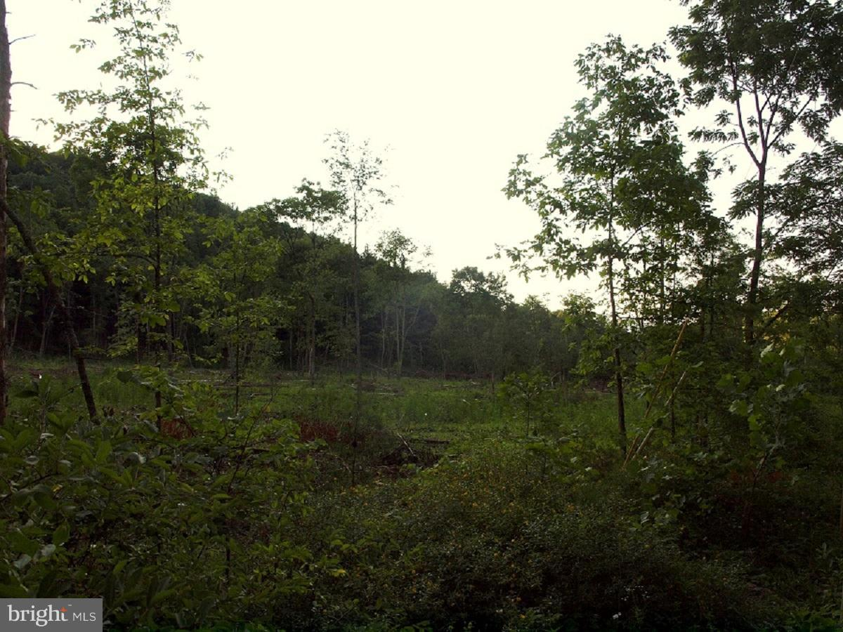 Land for Sale at 1864 Millers Run Road Sugar Grove, West Virginia 26815 United States