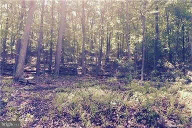 Land for Sale at Big Horn Trl Augusta, West Virginia 26704 United States