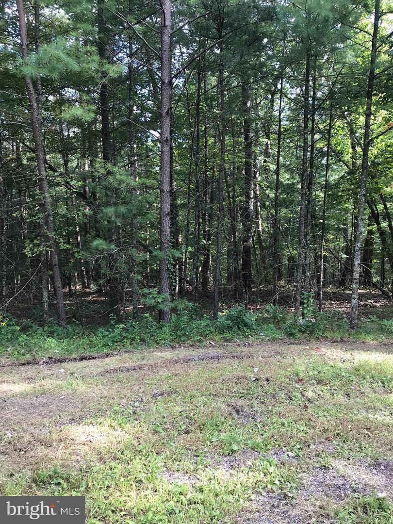 Land for Sale at Guldahl Ct Basye, Virginia 22810 United States