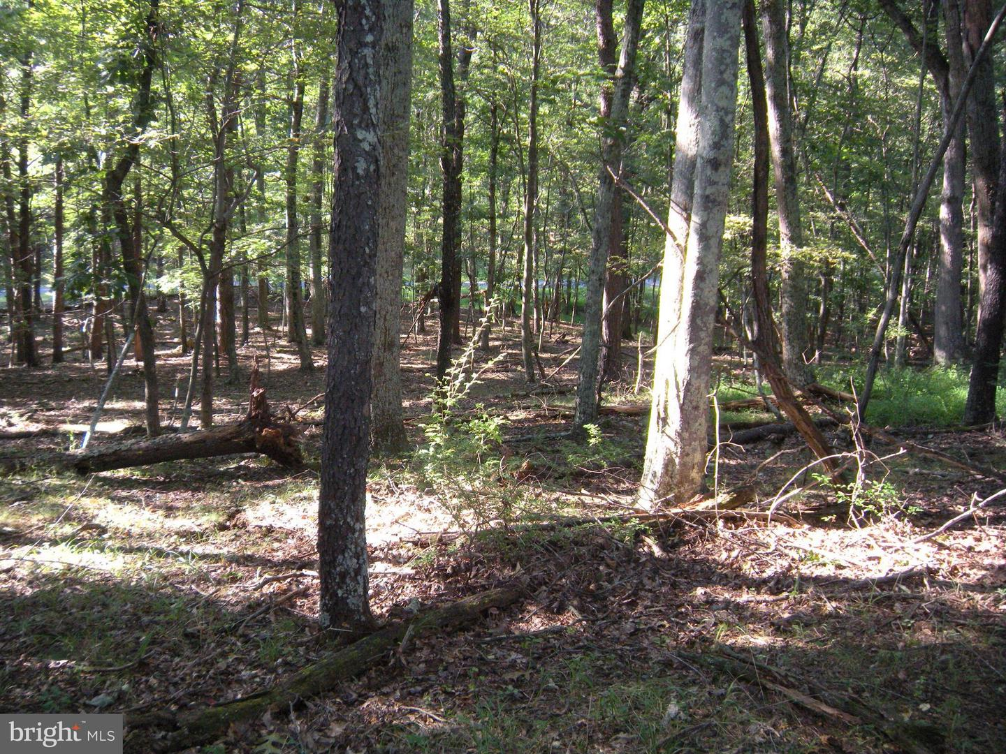 Land for Sale at 390 Paw Paw Mtn Rd High View, West Virginia 26808 United States