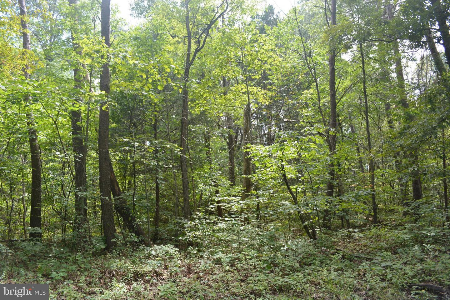 Land for Sale at Steed Ln Front Royal, Virginia 22630 United States