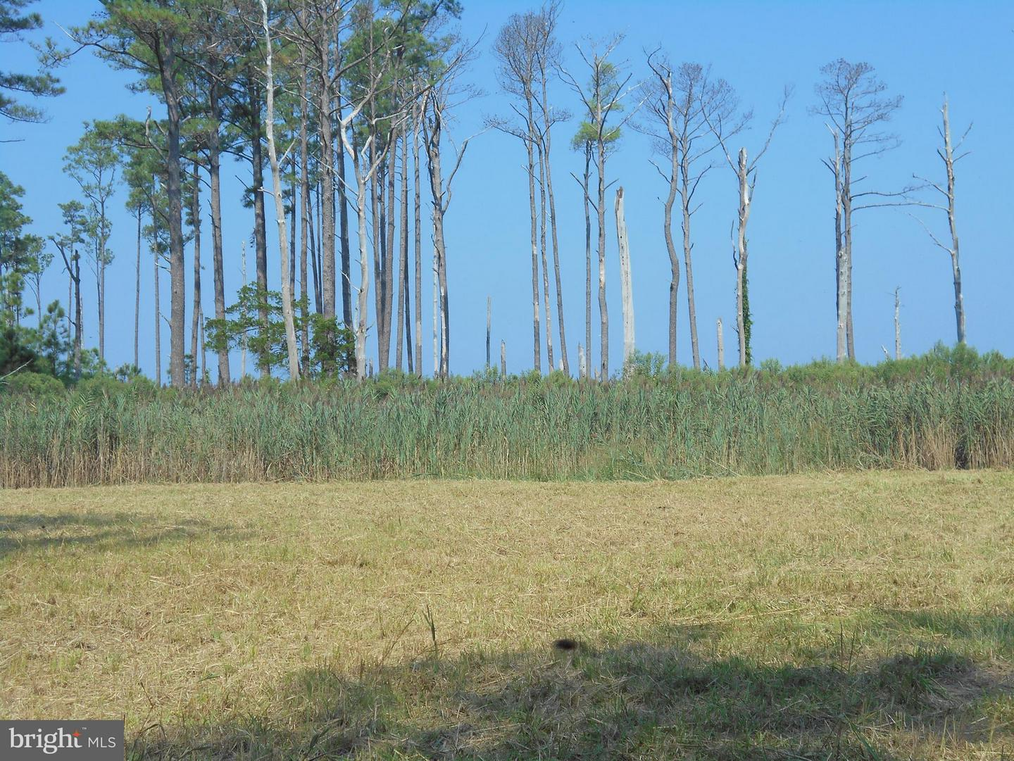 Land for Sale at Hoopers Neck Rd Taylors Island, Maryland 21669 United States