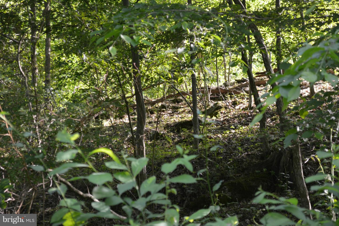 Additional photo for property listing at Thurston Rd  Dickerson, Maryland 20842 United States