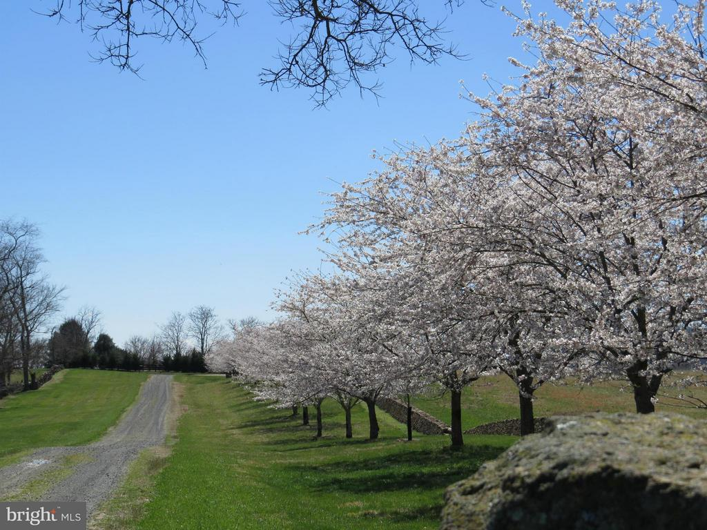 Stonewall and Cherry Tree lined drive - 96 LYLE LN, AMISSVILLE