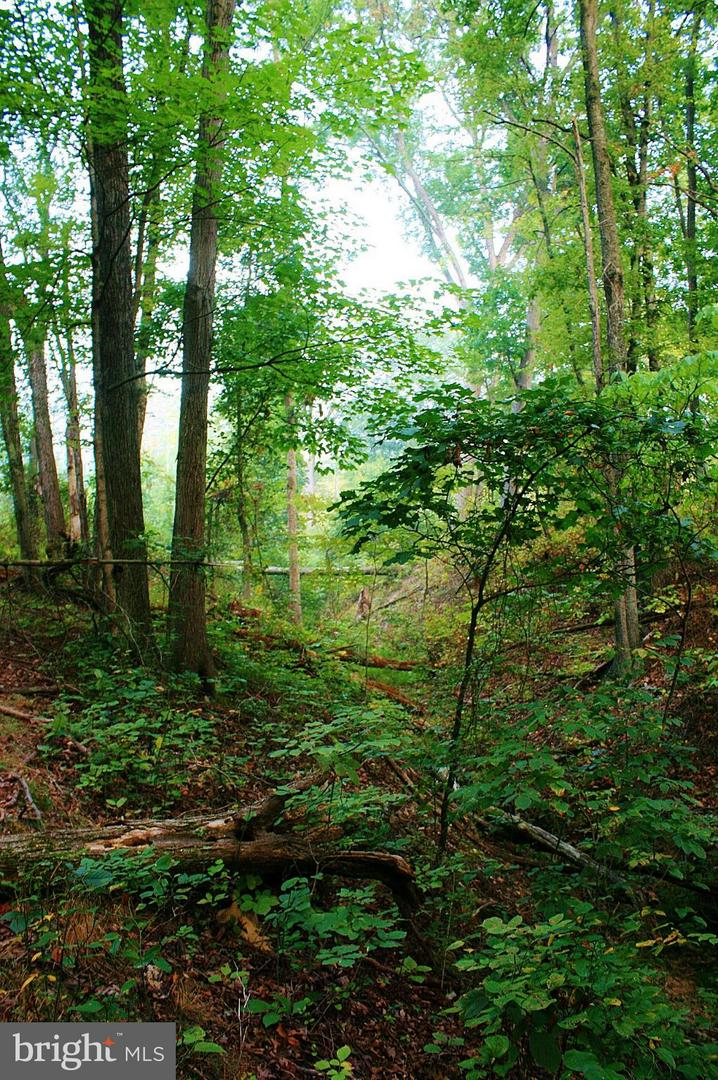 Land for Sale at Dehaven Road Berkeley Springs, West Virginia 25411 United States