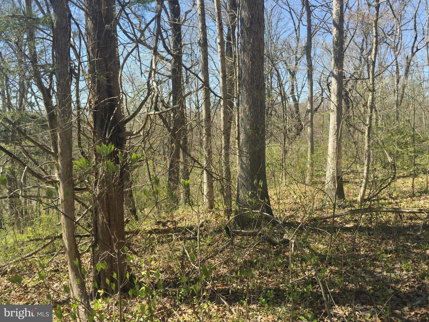 Land for Sale at Orange Springs Rd Unionville, Virginia 22567 United States