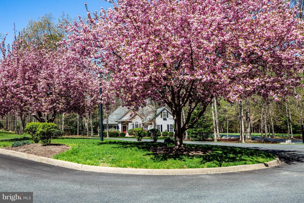 Spring photo - 11306 FIELD CIR, SPOTSYLVANIA