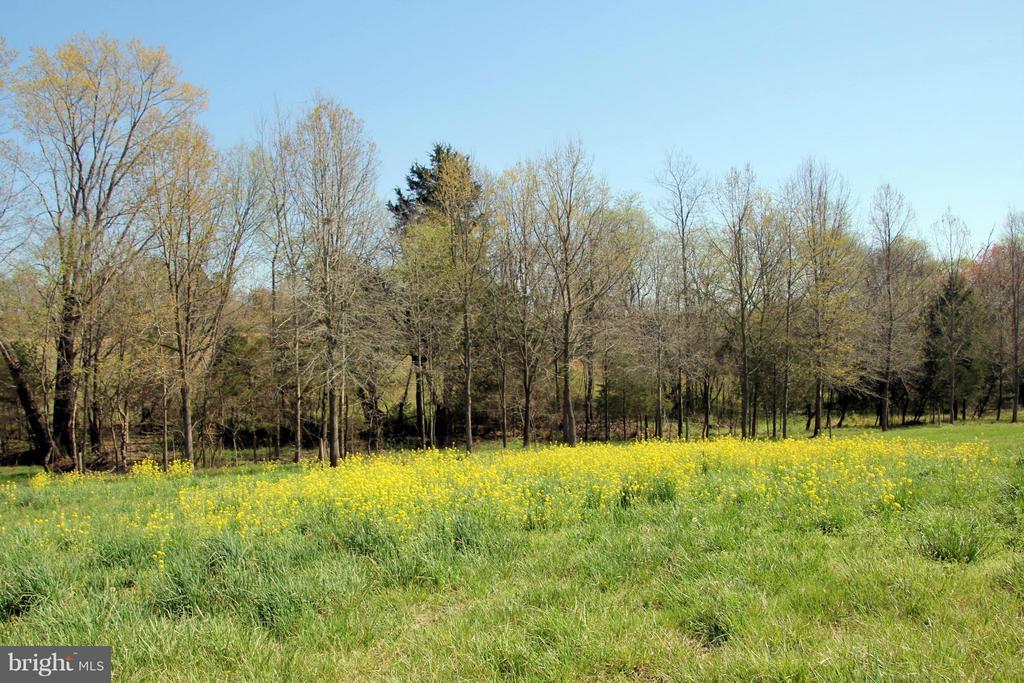 Field in the spring - 3374 TWYMANS MILL RD, ORANGE