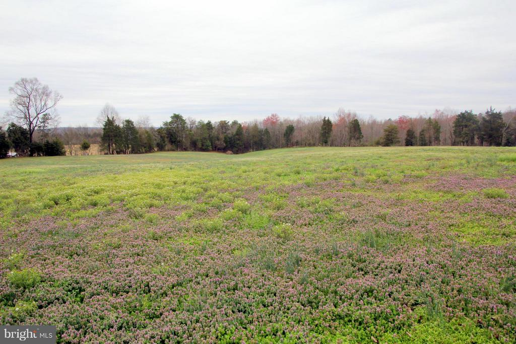Back field - 3374 TWYMANS MILL RD, ORANGE