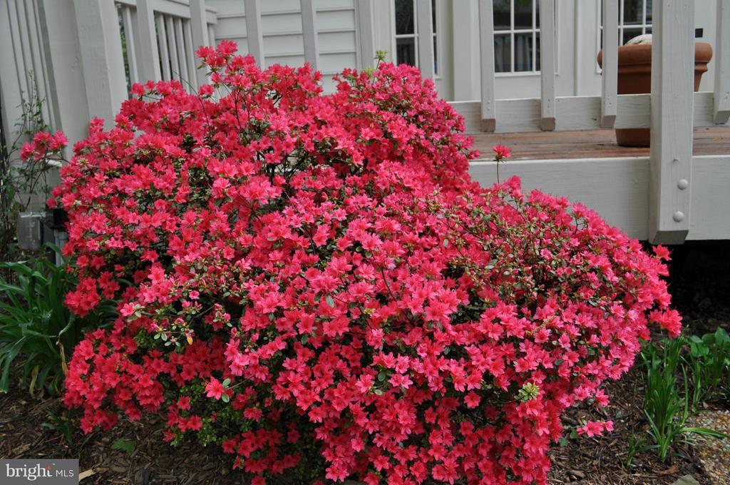 Garden - 2611 MEADOW HALL DR, HERNDON
