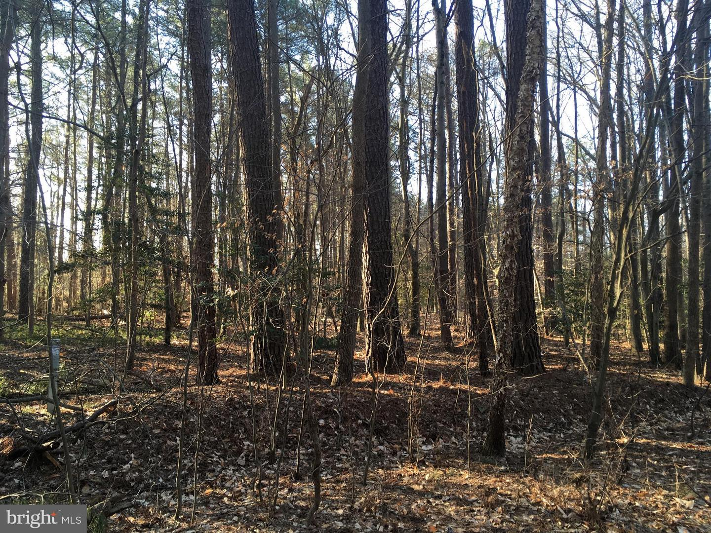 Land for Sale at 28 Poplar Rd Goldsboro, Maryland 21636 United States
