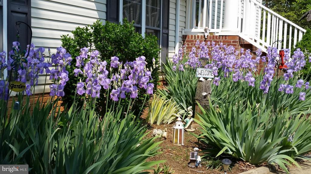 Flowers in Springtime - 7007 HUNTERS TRACE WAY, SPOTSYLVANIA