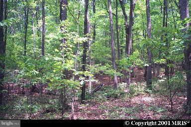 Land for Sale at Plum Run Rd Ridgeley, West Virginia 26753 United States