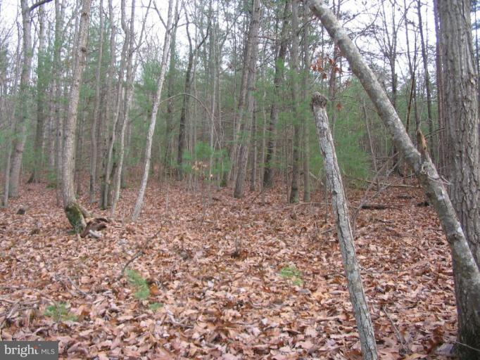 Land for Sale at 0 Dry Run Rd. Luray, Virginia 22835 United States