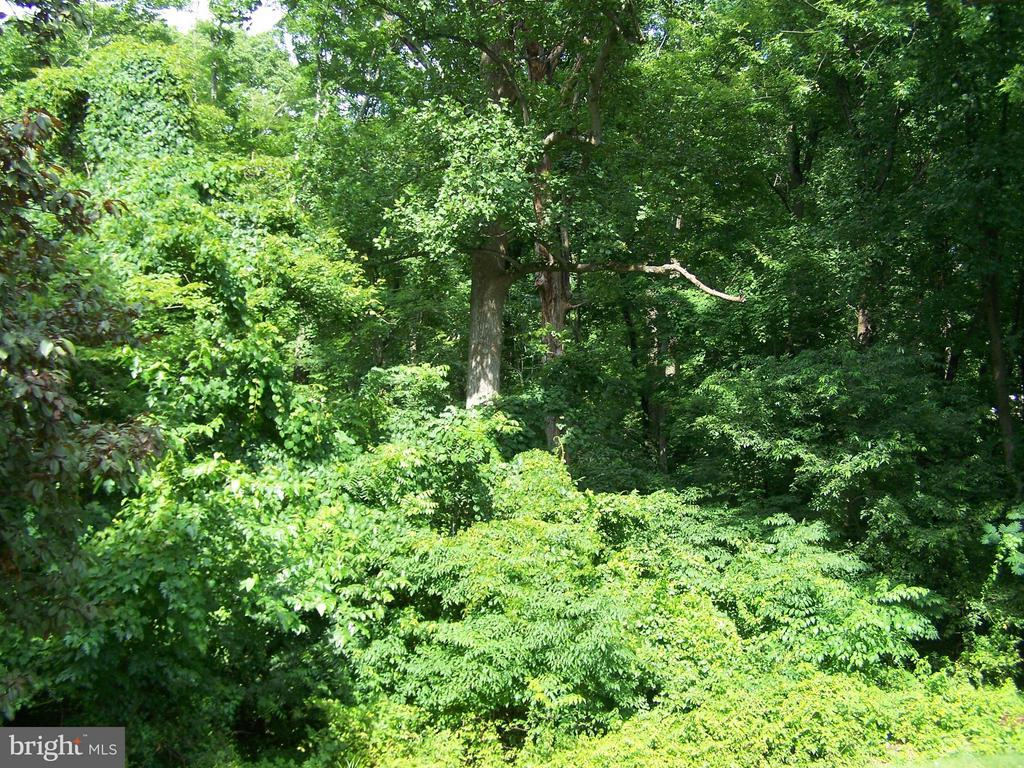 VIEW FROM DECK - 1816 CHERRY HILL RD, DUMFRIES