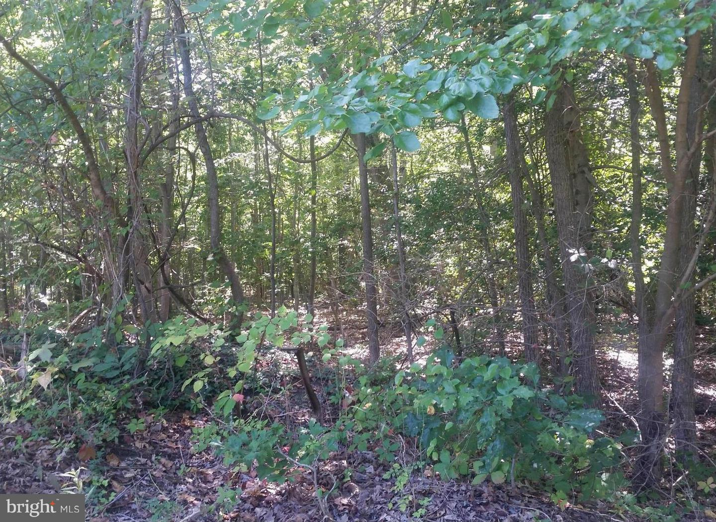 Additional photo for property listing at 719 Annapolis Neck Rd  Annapolis, Maryland 21403 United States