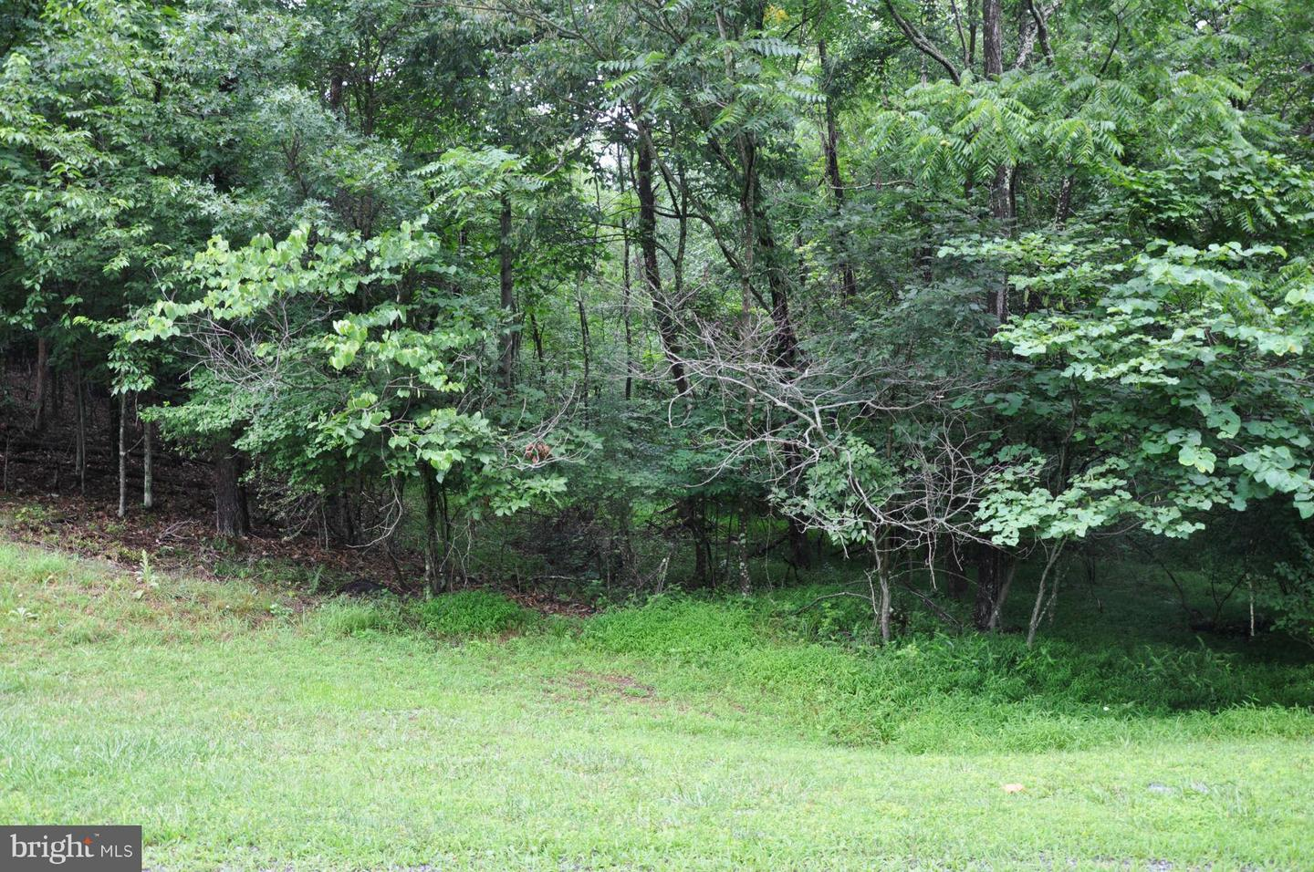 Additional photo for property listing at 0-L-111 Blackberry Ln Gore, Virginia 22637 United States