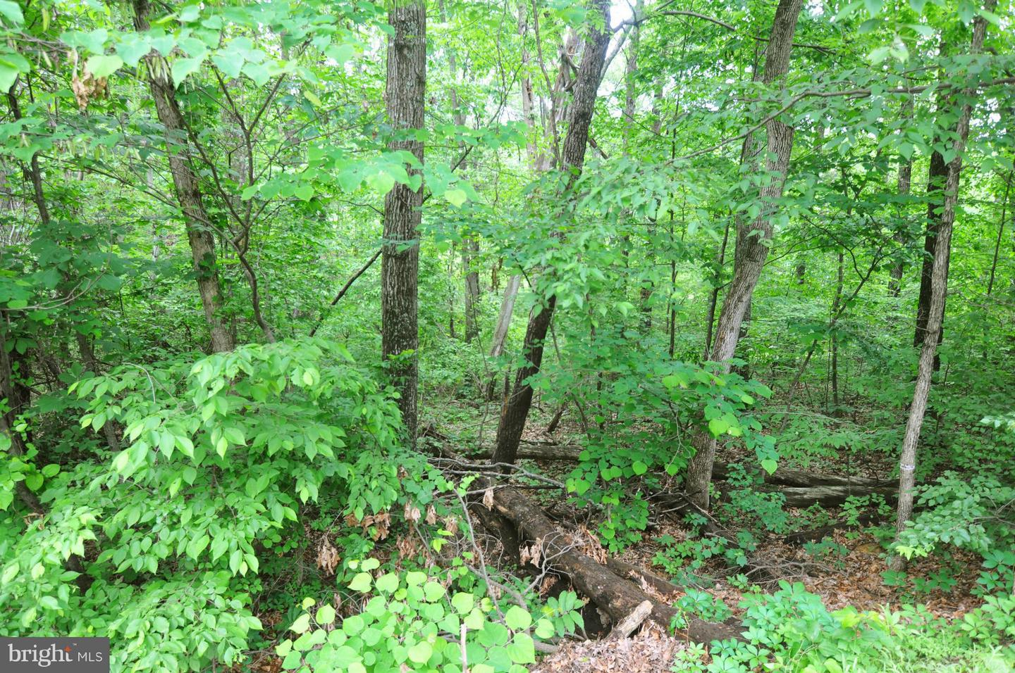 Additional photo for property listing at  Cross Junction, Virginia 22625 United States