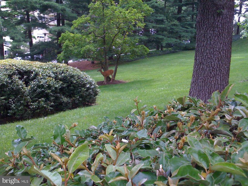 Beautiful Gardens and occasional deer! - 3900 WATSON PL NW #A-5E, WASHINGTON