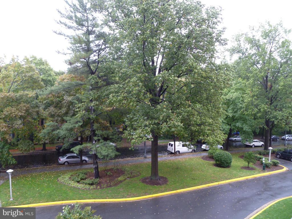 Beautiful Trees at Every Turn - 3900 WATSON PL NW #A-5E, WASHINGTON
