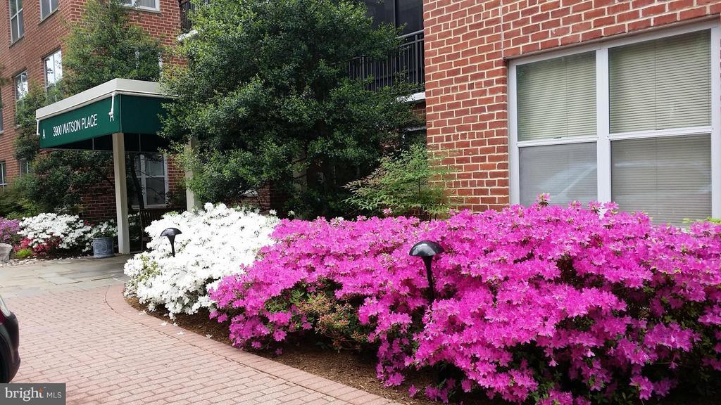 Flower Walkway to Your Building - 3900 WATSON PL NW #A-5E, WASHINGTON